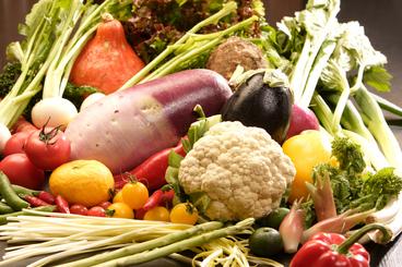自家菜園で収穫した野菜の数々