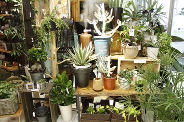 店内では個性豊かな観葉植物も販売