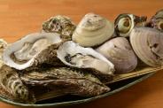 岩カキ、さらに大粒のハマグリや珍しい貝に出合えるかも